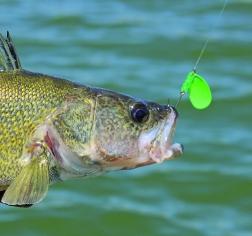 News dakota country magazine for Missouri fishing regulations