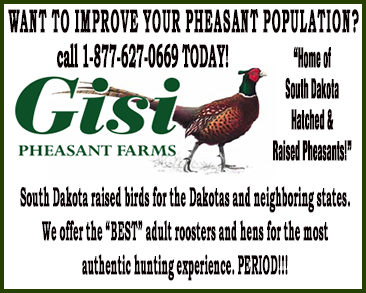 Gisi Pheasants Sq