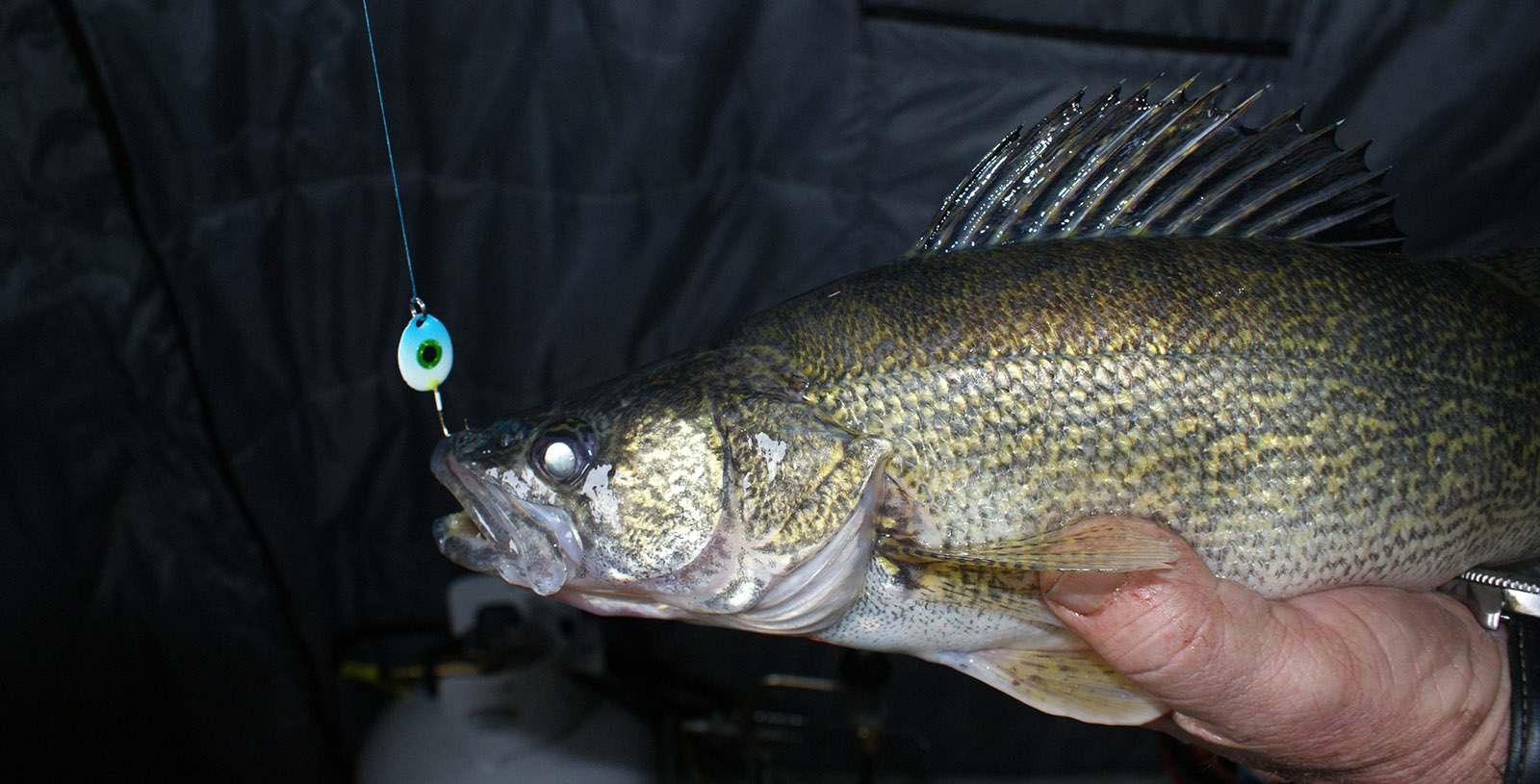 Walleye on Gemini